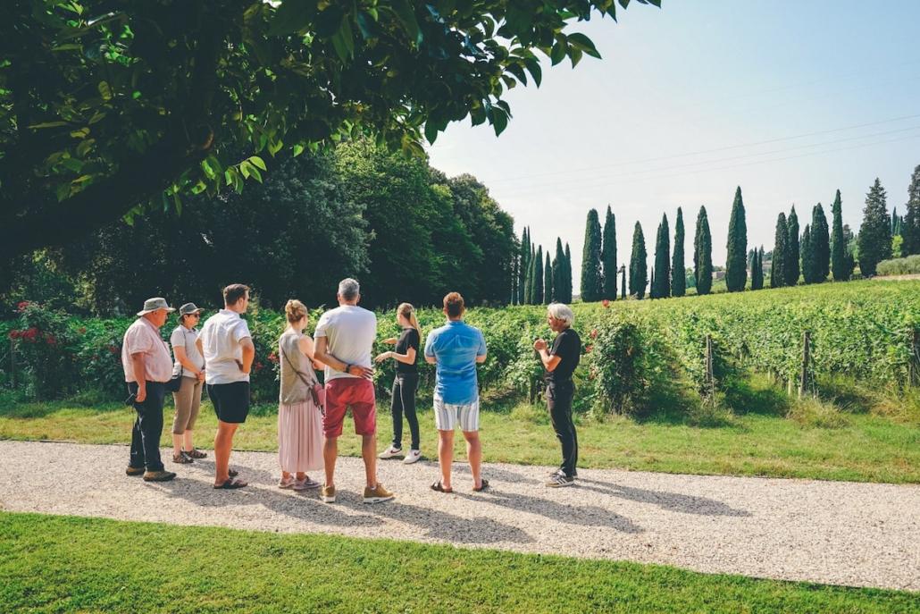 Tour dell'Amarone classico in Valpolicella